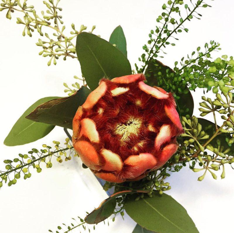 Paflagonian perillisten näköinen kukka. Viikko kirjamessuista ja vielä kestää.